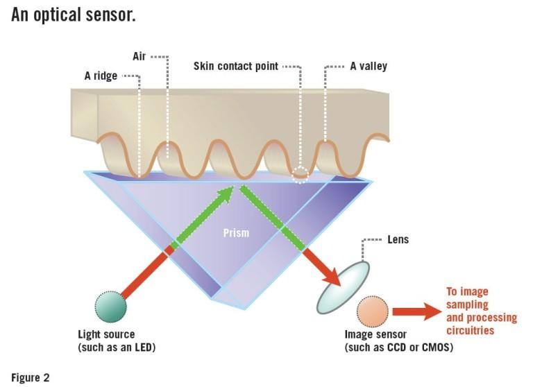 Optical fingerprint scanner